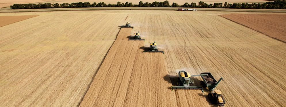camrose-combines-wheat-field